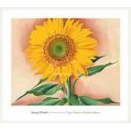 ポスター アート Sunflower from Maggie 1937(ジョージア オキーフ) 額装品 ウッドベーシックフレーム