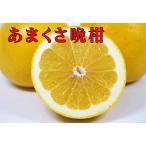 晩柑(ジューシーオレンジ)訳あり4.5kg+500g(保証分)約5kg 送料無料(ご自宅用)