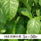 杜仲茶 国産 健康茶 5g×50p ドカ盛り(メール便送料無料・代引き不可)