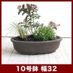 植木鉢 陶器鉢 常滑焼ウ泥盆栽鉢 小判エン付 10号