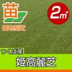 / 代引不可 / 姫高麗芝(張り芝用) つくば産 2平米(0.6坪分) 園芸