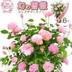 ショッピングバラ 桑野さんの幻の鉢バラ 鉢植え6号 ピンクサマースノー 母の日プレゼント用ラッピング付 2017年/母の日限定ギフト/送料込/