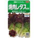 サカタのタネ 実咲野菜3685 焼肉レタス(赤) 赤葉チマ・サンチュ 00923685