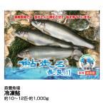 ギフト 魚 鮮魚 森養魚場 冷凍鮎 約10〜12匹_4560227540018_68