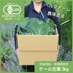 ケール生葉 自社農場産ケール 国産ケール原種 農薬化学肥料不使用 3kg入 ベルファーム 農場直送 野菜の王様