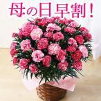 母の日 プレゼント 花 カーネーション 早期割引 さくらもなか5号 送料無料 母の日期間お届け