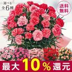 母の日 プレゼント ギフト 2020 お花 花 カーネーション 送料無料 花鉢 母の日期間お届け カーネーション さくらもなか 5号