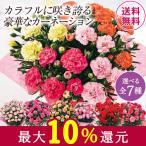 母の日 2021 早割 ギフト ランキング プレゼント カーネーション 花鉢 鉢植え 4色 ミックス しあわせ 5号 母の日期間お届け