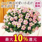 母の日 2021 早割 ギフト 贈答 プレゼント 花鉢 鉢植え サフィニアアートももいろハート 5号 母の日期間お届け