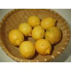 無施肥無農薬栽培 愛媛県産訳ありレモン約1kg