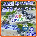 ブルーベリー 1kg 無農薬 国産 生 大粒 Lサイズ 長野県 安曇野 500g × 2パック 送料無料 百笑