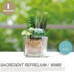 イミテーショングリーン フェイクグリーン サキュレントリフレリウム 消臭アーティフィシャルグリーン SUCCULENT REFRERIUM KH-60985 人工観葉植物