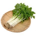 新鮮水耕野菜 ミニホワイトセロリ 100gパック