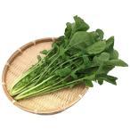 新鮮産直野菜 ルッコラ 100gパック