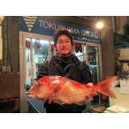 「天然鯛(鳴門鯛)」(徳島県産)丸々1匹(約1Kg)(送料込)