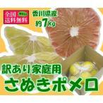 訳ありさぬきポメロ 約7kg 香川県産