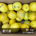 柑橘类 - 訳ありさぬきレモン 約5kgサイズ混合 香川県産