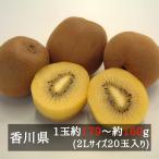 さぬきゴールドキウイ(黄様) 2L 20玉入り 香川県産