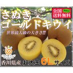 さぬきゴールドキウイ(黄様) 6L 16玉入り 香川県産