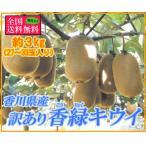 訳あり香緑キウイ 約3kg サイズ混合 香川県産