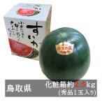 大栄の黒小玉すいか 秀品1玉化粧箱入り(約2.5kg) 鳥取県産