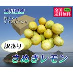 訳ありさぬきレモン 約2kgサイズおまかせ 香川県産
