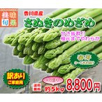 アスパラガス 訳ありさぬきのめざめ春芽 約5kg サイズ混合 香川県産