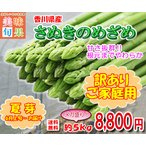 (6月上旬以降発送)アスパラガス 訳ありさぬきのめざめ夏芽 約5kg 香川県産