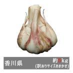 訳あり生にんにく 約5kgサイズおまかせ 香川県産