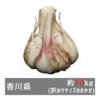 訳あり生にんにく 約10kgサイズおまかせ 香川県産