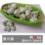訳あり乾燥にんにく 約20kg(サイズおまかせ) 香川県産