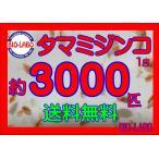 タマミジンコ 1g   3000匹以上