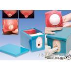 【無料健康相談対象製品】世界基準 3Bサイエンフィティック社 【模型】妊娠・分娩過程モデルセット【鍼灸】【模型】