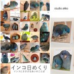 studio akko / インコ日めくり/サザナミインコ・コバ