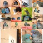 studio akko  ポストカードブック サザナミインコ コバルト  ブルー 151A0245 ネコポス対応可能 BIRDMORE バードモア CRAFT GARDEN 鳥用品 鳥グッズ