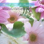 ガーベラをお好きな本数 各色10本から花束にも ガーベラを花束に