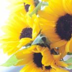 ヒマワリ お好きな本数 10本から 花束 向日葵 ひまわり 夏に人気 誕生日 お祝い プレゼント