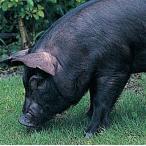 沖縄・やんばる豚・焼肉食べ比べセット(ロース&バラ&こまぎれ)