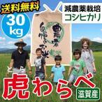 2020年度 米 お米 30kg コシヒカリ 虎わらべ 滋賀県産 白米 玄米 ファーム虎姫 送料無料 9月中旬出荷予定