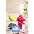 花とギフトのセット 胡蝶蘭 大輪1本立とカタログギフト(ミストラル/マロウ)