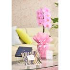 花とギフトのセット 選べる花色のカラー胡蝶蘭 彩 - irodori - 1本立(暖色系)とカタログギフト(ヴァンウェスト/アルドワーズ)