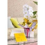花とギフトのセット 選べる花色のカラー胡蝶蘭 彩 - irodori - 1本立(寒色系)とカタログギフト(メイドインジャパン/MJ06)
