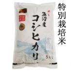 魚沼産コシヒカリ 令和元年度産 極上 特別栽培米 5kg 5キロ   うるち米(精白米) コシヒカリ