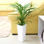 観葉植物 空気も綺麗に!アレカヤシ 5号 スクエアホワイト陶器鉢