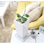観葉植物 幸せのスウィートハート(ホヤハート)・ホワイトスクエア陶器鉢 珍しいフイリタイプ