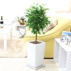 観葉植物 ベンジャミン トピアリー 8号 ホワイトスクエア陶器鉢