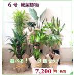 選べる 観葉植物 6号 3個セット ミリオンバンブー 幸福の木 パキラ ガジュマル等々