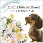 ペット専用選べるお供えの花 アレンジメント