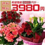 母の日限定 おまかせ鉢花セット
