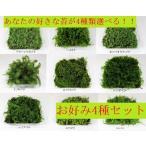 苔盆栽 テラリウム の 苔 選べる こけ お好み コケ 4種 セット 【 送料無料 】